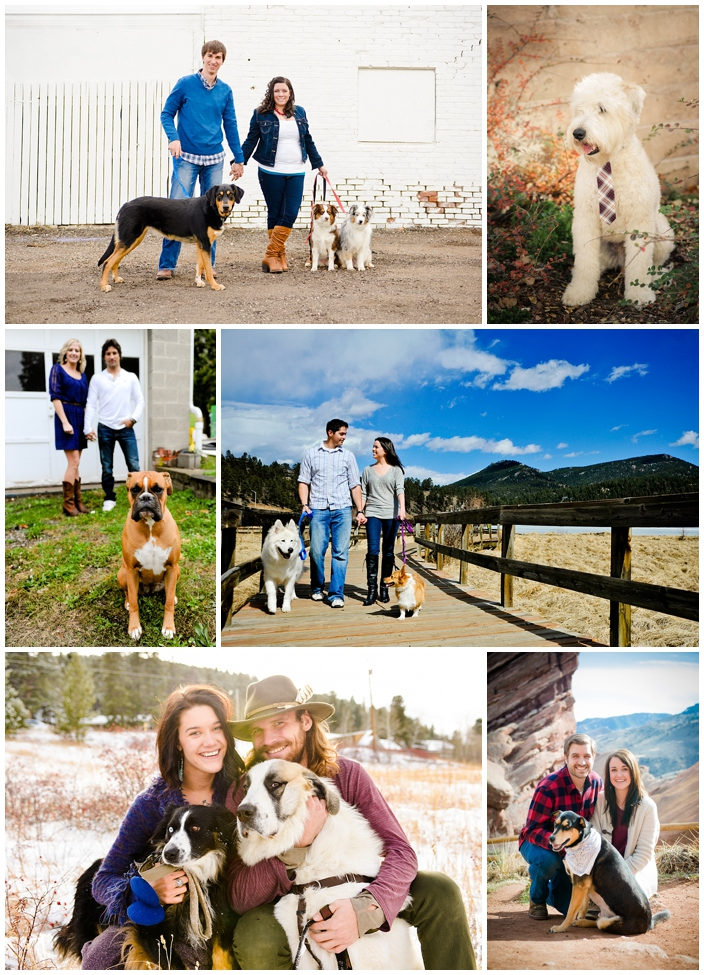 engagements with dogs