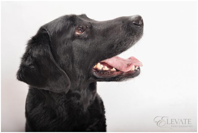 Dog_Fine_Art_Portrait_0011