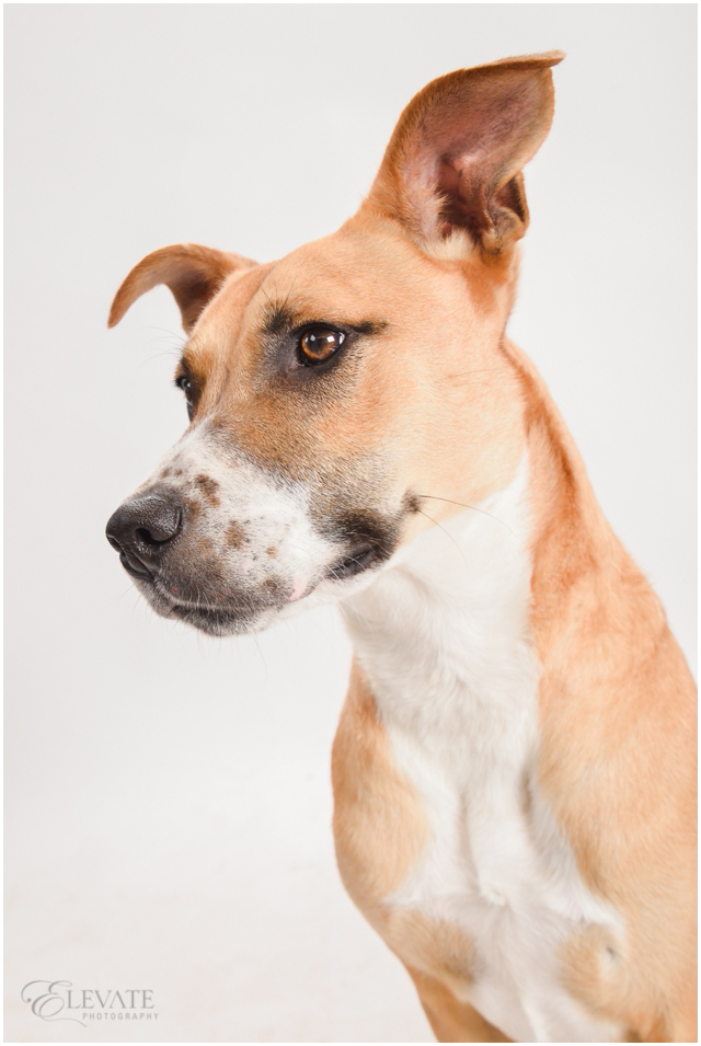 Dog_Fine_Art_Portrait_0034
