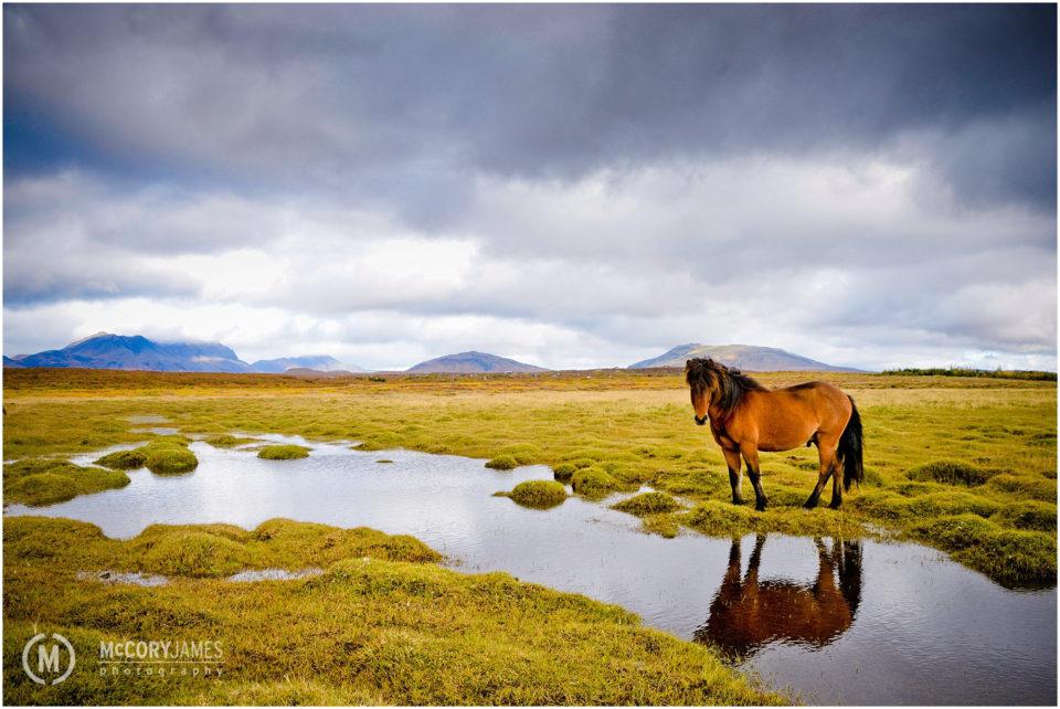 iceland-travel-photography-9