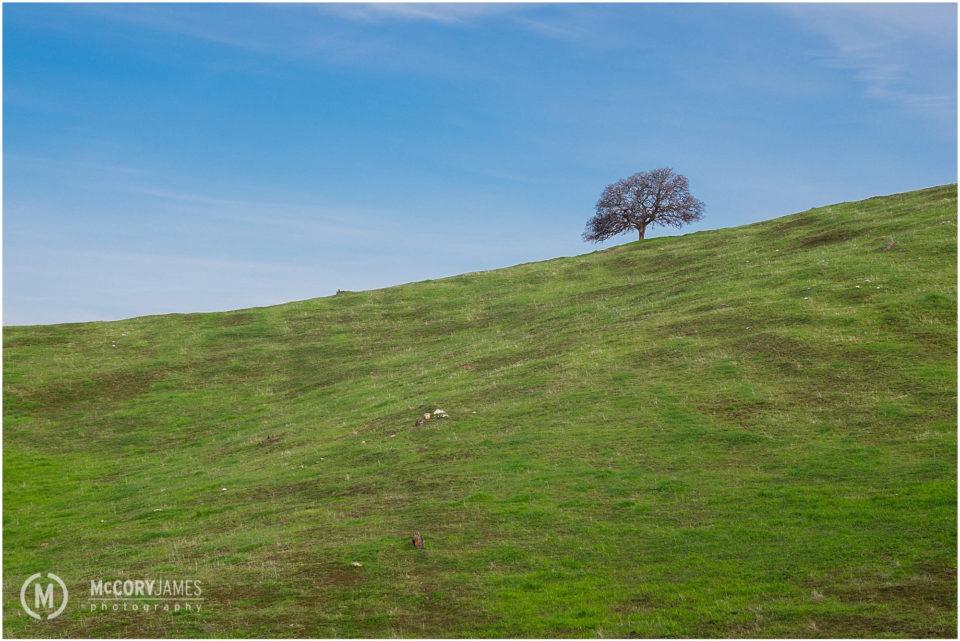 yosemite_landscape_photography_0005
