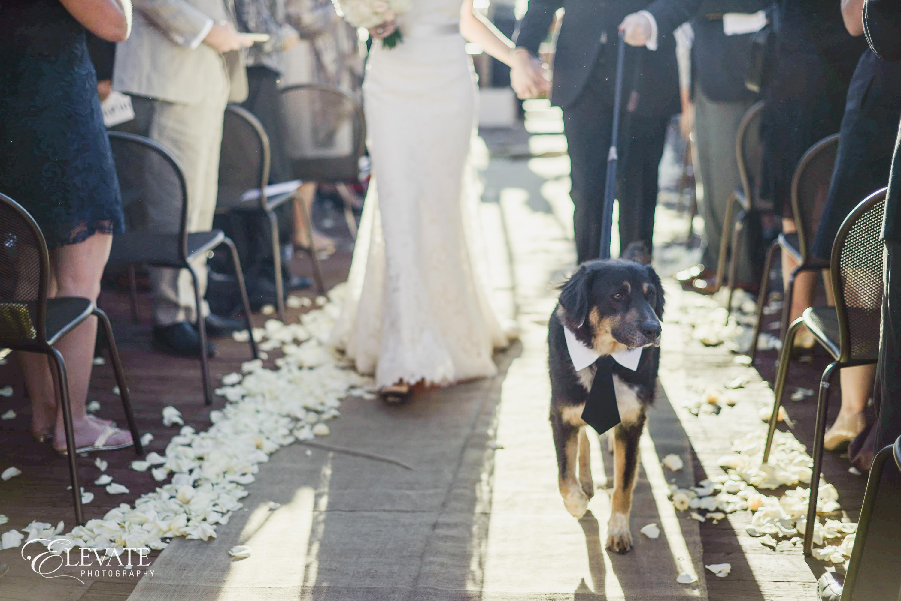 mountain wedding dog