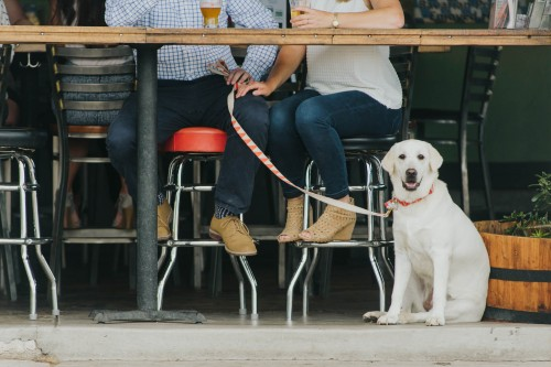 brewery engagement dog
